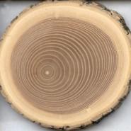 Основные породы деревьев, необходимые для реставрации и их краткая характеристика